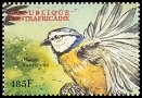Cl: African Blue Tit (Cyanistes teneriffae)(Out of range)  new (2000)