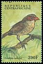 Cl: Common Waxbill (Estrilda astrild) new (2000)