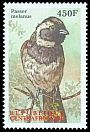 Cl: Cape Sparrow (Passer melanurus)(Out of range)  new (2000)