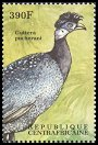 Cl: Crested Guineafowl (Guttera pucherani) new (2000)