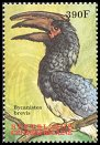 Cl: Silvery-cheeked Hornbill (Ceratogymna brevis)(Out of range)  new (2000)