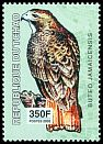 Cl: Red-tailed Hawk (Buteo jamaicensis)(Out of range)  new (2002)