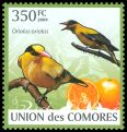 Cl: Black-naped Oriole (Oriolus chinensis)(Out of range)  new (2009)  [6/60]