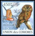Cl: Comoro Scops-Owl (Otus pauliani) new (2009)  [6/40]