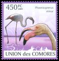 Cl: Greater Flamingo (Phoenicopterus roseus)(Repeat for this country)  new (2009)  [6/59]