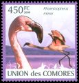 Cl: Lesser Flamingo (Phoenicopterus minor) new (2009)  [6/59]