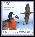 Cl: White-faced Whistling-Duck (Dendrocygna viduata)(Repeat for this country)  new (2009)  [6/50]