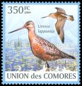 Cl: Bar-tailed Godwit (Limosa lapponica) new (2009)  [6/60]