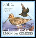 Cl: Pintail Snipe (Gallinago stenura) new (2009)  [6/60]