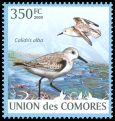 Cl: Sanderling (Calidris alba) new (2009)  [6/60]