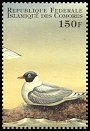 Cl: Franklin's Gull (Larus pipixcan)(Out of range)  new (1998)  [5/58]