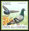 Cl: Rock Pigeon (Columba livia) new (2009)  [6/50]