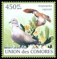 Cl: Ring-necked Dove (Streptopelia capicola) new (2009)  [6/50]