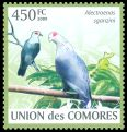 Cl: Comoro Blue-Pigeon (Alectroenas sganzini)(Endemic or near-endemic)  new (2009)  [6/50]