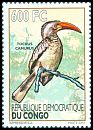 Cl: Red-billed Dwarf Hornbill (Tockus camurus) new (2012)  [5/42]