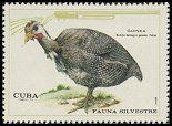 Cl: Helmeted Guineafowl (Numida meleagris galeata) <<Guinea>> (Introduced)  SG 1795 (1970) 90 [3/23]