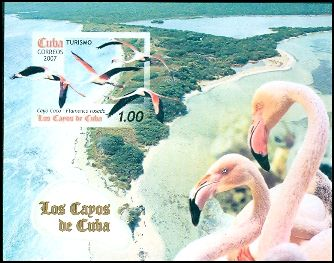 Cl: Caribbean Flamingo (Phoenicopterus ruber)(Repeat for this country)  SG 5072 (2007)  [4/23]
