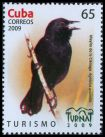 Cl: Red-shouldered Blackbird (Agelaius assimilis) <<Mayito de la Clenega>> (Endemic or near-endemic)  SG 5430 (2009)  [6/28]