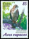 Cl: Broad-winged Hawk (Buteo platypterus) <<Gavil&aacute;n Bobo>> (Repeat for this country)  new (2017)  [11/37]