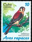 Cl: American Kestrel (Falco sparverius) <<Cern¡calo>> (Repeat for this country)  new (2017)  [11/37]