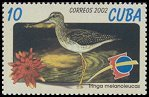 Cl: Greater Yellowlegs (Tringa melanoleuca) SG 4586 (2002)  [1/11]