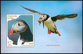 Cl: Atlantic Puffin (Fratercula arctica)(Out of range)  new (2016)