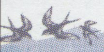 Detail of Swallows