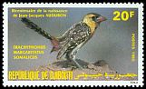 Cl: Yellow-breasted Barbet (Trachyphonus margaritatus somalicus) SG 943 (1985) 220