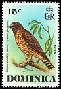 Cl: Broad-winged Hawk (Buteo platypterus) <<Malfini>>  SG 526 (1976) 125
