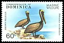 Cl: Brown Pelican (Pelecanus occidentalis) SG 663 (1979) 225