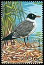 Cl: Laughing Gull (Larus atricilla) SG 1950 (1995) 30