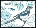 Cl: Eurasian Magpie (Pica pica) new (2018)  [11/42]