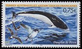 Cl: Wilson's Storm-Petrel (Oceanites oceanicus)(Repeat for this country)  SG 521 (2004)