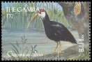 Cl: Southern Bald Ibis (Geronticus calvus)(Out of range)  SG 3362 (2000) 100