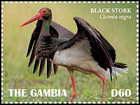 Cl: Black Stork (Ciconia nigra)(Repeat for this country)  new (2019)