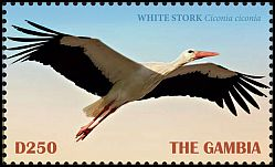 Cl: White Stork (Ciconia ciconia) new (2019)