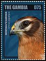 Cl: Montagu's Harrier (Circus pygargus) new (2014)
