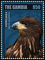 Cl: Steppe Eagle (Aquila nipalensis)(Out of range)  new (2014)