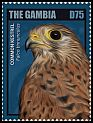 Cl: Eurasian Kestrel (Falco tinnunculus)(Repeat for this country)  new (2014)