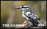 Cl: Pied Kingfisher (Ceryle rudis)(Repeat for this country)  new (2015)