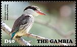 Cl: Striped Kingfisher (Halcyon chelicuti) new (2015)