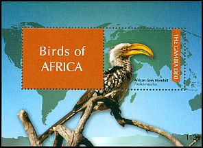 Cl: Southern Yellow-billed Hornbill (Tockus leucomelas)(Out of range)  SG 5456 (2011) 300 [7/38]