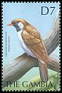 Cl: Greater Honeyguide (Indicator indicator) SG 3745 (2000) 200