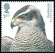 Cl: Northern Goshawk (Accipiter gentilis) SG 4206 (2019)  [11/56]