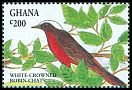 Cl: White-crowned Robin-Chat (Cossypha albicapilla)(Repeat for this country)  SG 1980 (1994) 60