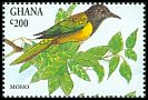 Cl: Oriole Warbler (Hypergerus atriceps) <<Moho>>  SG 1989 (1994) 60