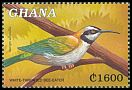 Cl: White-throated Bee-eater (Merops albicollis) SG 3012 (2000) 90