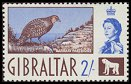 Cl: Barbary Partridge (Alectoris barbara) SG 170 (1960) 1900 [3/19]