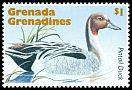 Cl: Northern Pintail (Anas acuta)(Out of range)  SG 2004 (1995)
