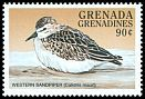 Cl: Western Sandpiper (Calidris mauri)(Out of range)  SG 2581 (1998)